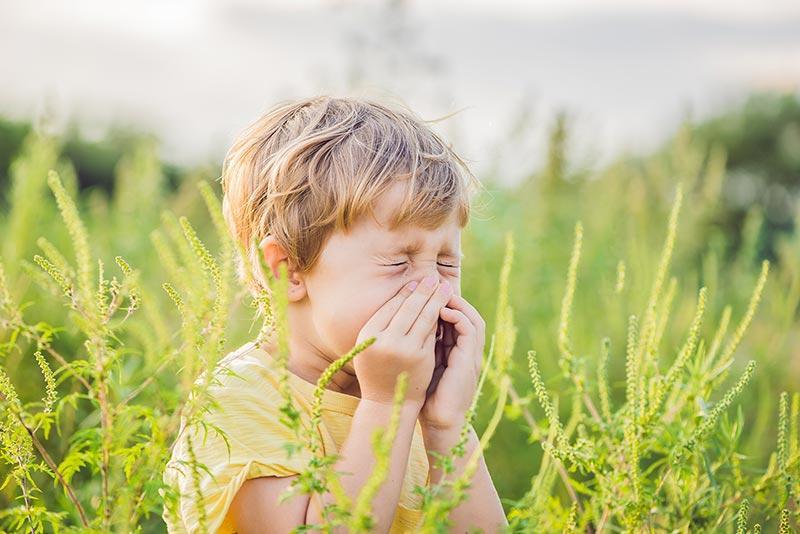 Die Nase frei – und wieder durchatmen! So helfen Pflanzen bei Allergien