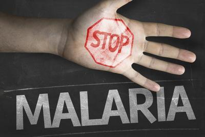 Gegen Malaria sind die Blätter des Einjährigen Beifuß wirksamer als Arzneimittel